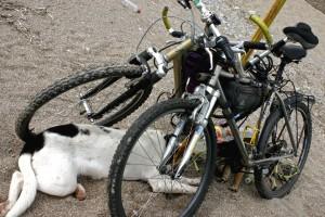 Велопоход, велопрогулка, велосипедные покатушки. Выполнение Технического Обслуживания